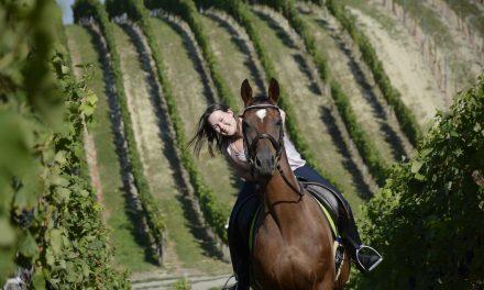 Born to make wine